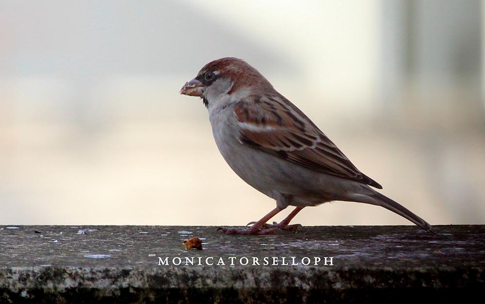 birdwatching passerotto casa vacanze la scisa appartamenti nel salento