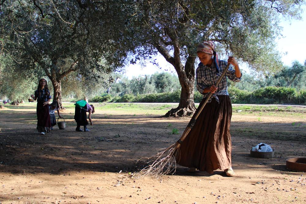 Ciclo dall'Olivo all'Olio dell'azienda agricola Agrosì