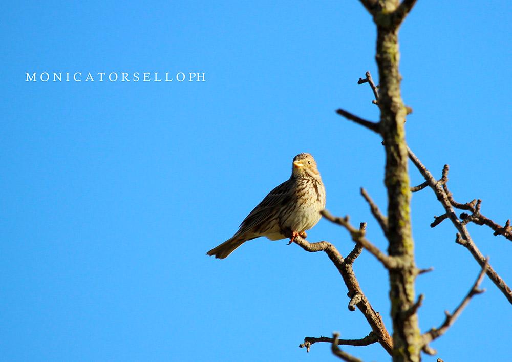 birdwatching Strillozzo casa vacanze la scisa appartamenti nel salento