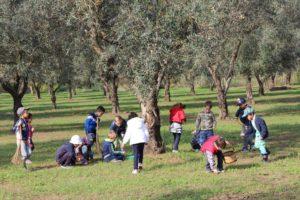 azienda agricola agrosi blog olio alimentazione bambini